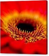 Flower Macro 1 Canvas Print
