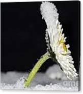 Flower With Snow Canvas Print