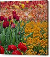 Flowers Everywhere Canvas Print