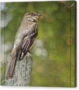 Flycatcher In Southern Missouri Canvas Print
