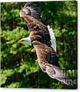 Flying Eagle Canvas Print