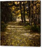 Follow The Light Canvas Print