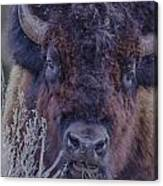 Forest Bull Canvas Print