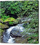 Forest Creek Canvas Print
