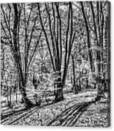Forest View Canvas Print