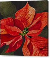 Franci's Poinsettia Canvas Print