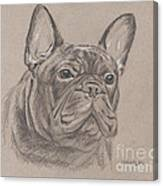 French Bulldog - Snickers Canvas Print
