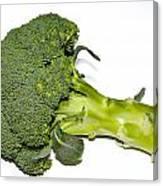 Fresh Raw Green Broccoli Canvas Print
