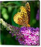 Fritillary Butterfly  Canvas Print