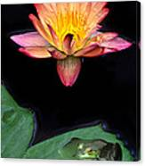 Frog And Waterlily Canvas Print