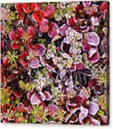 Frost On Autumn Tundra Canvas Print