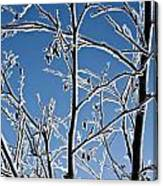 Frozen Tree Branches   In  Winter Canvas Print