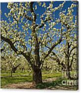Fruit Orchard Canvas Print