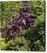 Garden Color At Woodward Park 8f Canvas Print