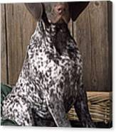 German Short-haired Pointer Dog Canvas Print