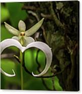 Ghost Orchid Canvas Print