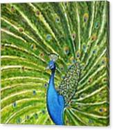Glorious Peacock Canvas Print