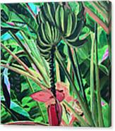 Going Bananas Canvas Print