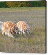 Golden Retriever Dogs On The Hunt Canvas Print