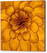 Golden Sunshine - Dahlia Canvas Print