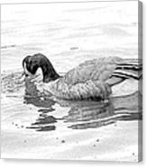 Goose In The Water Canvas Print