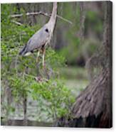 Great Blue Heron (ardea Herodias Canvas Print