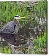 Great Blue Heron At Deboville Slough 2 Canvas Print