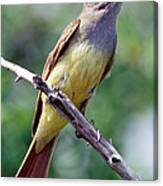 Great Crested Flycatcher With Captured Canvas Print