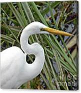 Great Egret Close Up Canvas Print