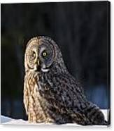 Great Gray Owl Pictures 789 Canvas Print