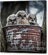 Great Horned Owl Chicks Canvas Print