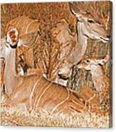 Greater Kudu Mother And Baby Canvas Print
