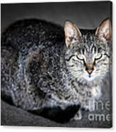 Grey Cat Portrait Canvas Print