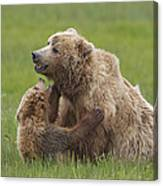 Grizzly Bear Playing With Cub Lake Canvas Print