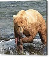 Grizzly Bear Salmon Fishing Canvas Print