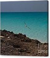 Gull Riding The Wind Canvas Print