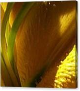 1 H Na Lily Canvas Print