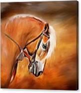 Haflinger Canvas Print