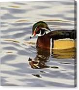 Handsome Wood Duck Canvas Print