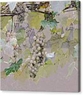 Hanging Thompson Grapes Sultana Canvas Print
