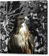 Hawk Of Prey Canvas Print
