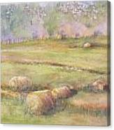 Hay Feilds Canvas Print