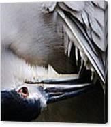 Heron Feathers Canvas Print