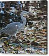 Heron On The River Canvas Print