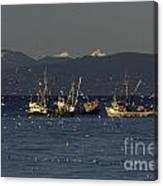 Herring Fishing Canvas Print