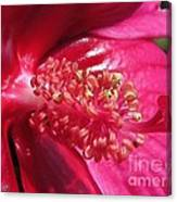 Hibiscus Named Luna Rose Canvas Print