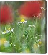 Hidden Flower Canvas Print
