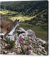 High And Wild Canvas Print
