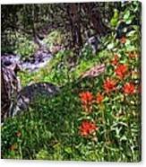 High Country Wildflowers 2 Canvas Print