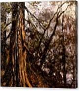 Hillside Ancient Canvas Print